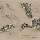 Speckled King-snake by SnakeArtist