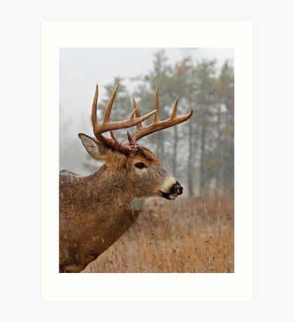 Bullet Buck - White-tailed deer Art Print