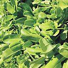 Bright Green Tropical Leafy Plant by AlexandraStr