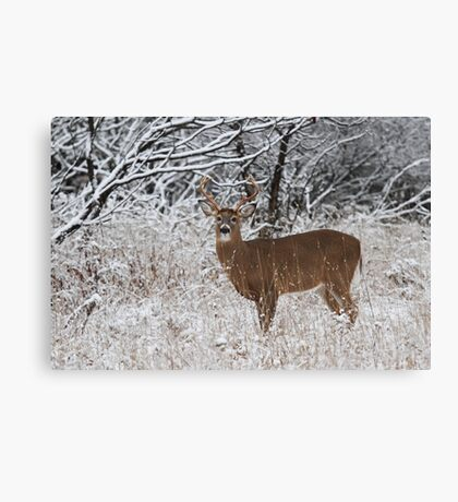White-tailed deer buck in snow Canvas Print