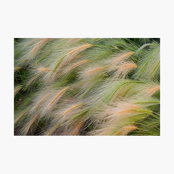 Weeds Photographic Print