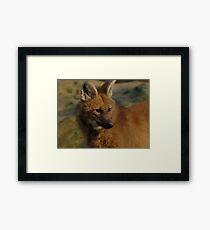 Maned Wolf Framed Print