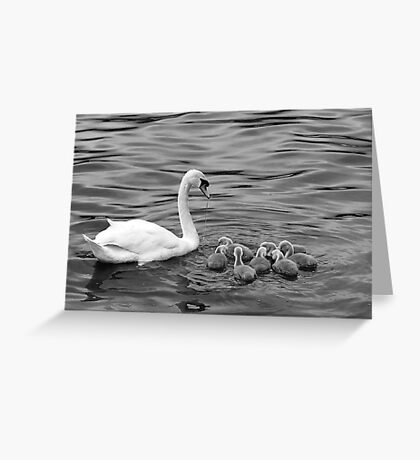 Ugly Ducklings Greeting Card
