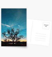 Idaho tree Postcards