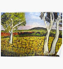 Outback Gum Trees  Poster