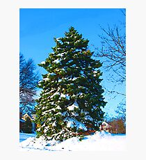 Evergreen in Winter Photographic Print