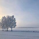 Winter wonderland by Bente Agerup