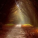 The Lane by Paul Gibbons