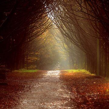 The Lane by spottydog06