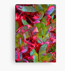 colorful agaves * Canvas Print