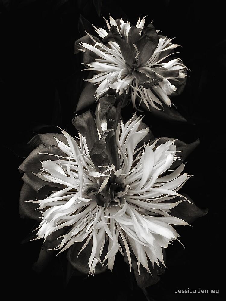 Peony Petals in b&w by Jessica Jenney