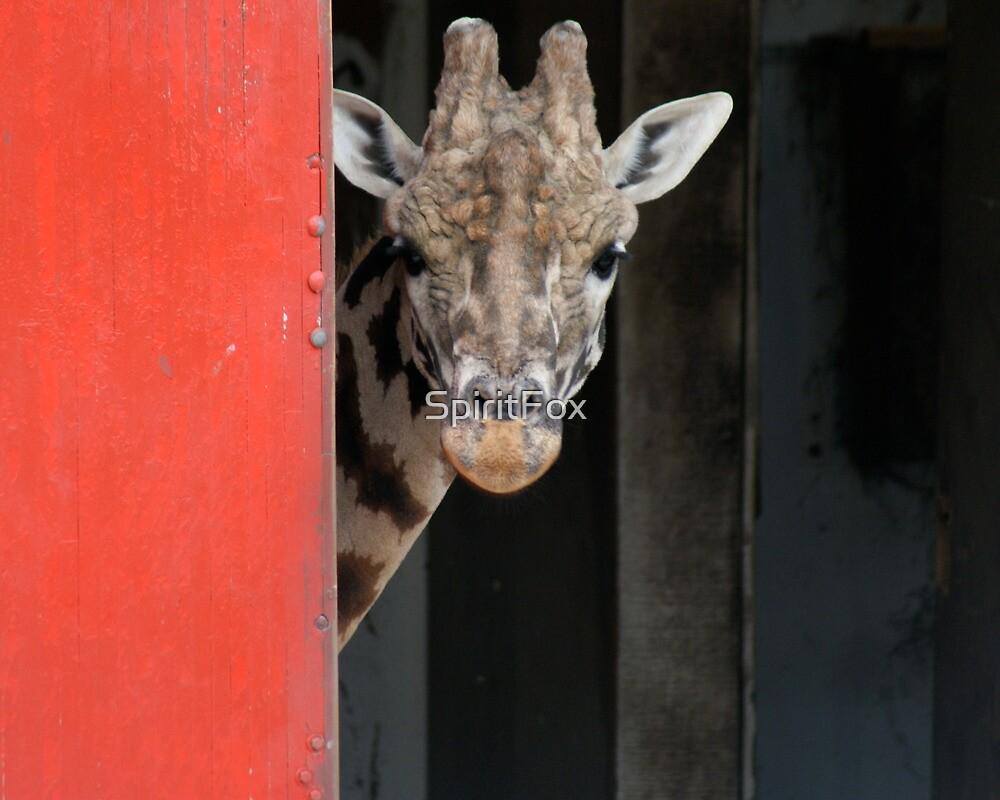Giraffe Behind the Barn Door by SpiritFox