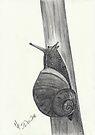 Snail sketch by Martina Fagan