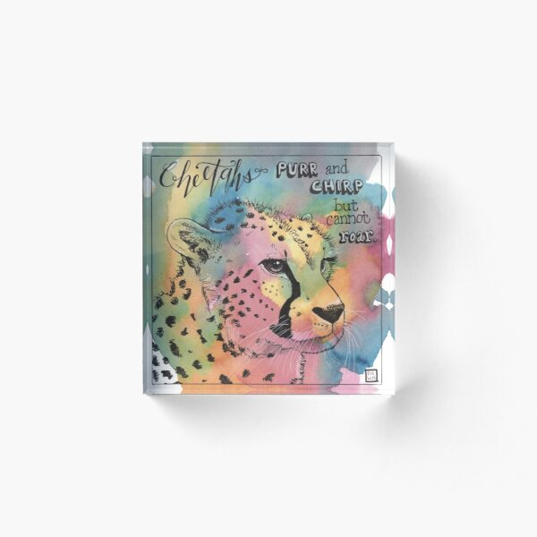 Cheetahs purr and chirp but cannot roar Acrylic Block