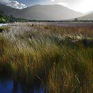 Tidal River Marsh by Mark Higgins