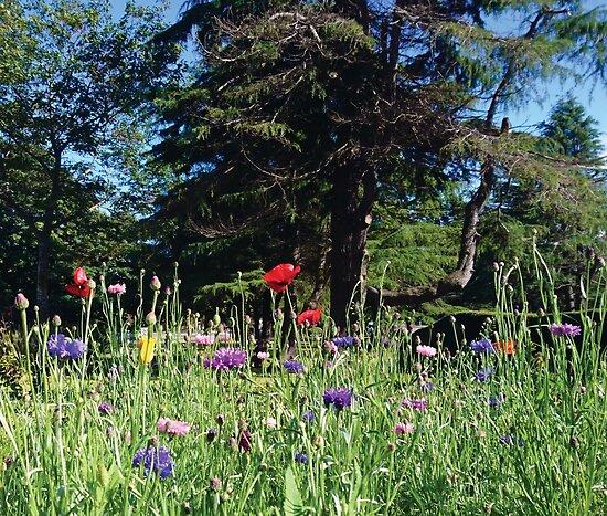 Parkbäume und Wildblumen von bettyretro