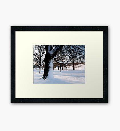 Winter Oak 2 Framed Print