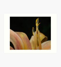 Macro Lilly Art Print
