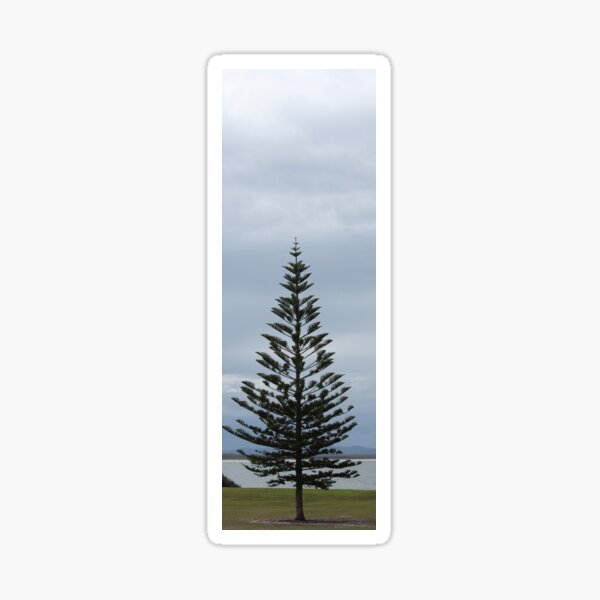 Norfolk Pine  Foster Sticker