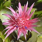 Pink Spikes by Penny Smith