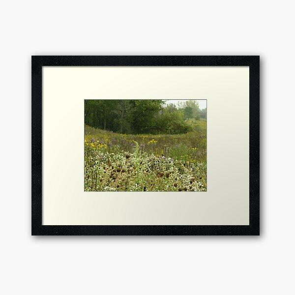 Wildflowers at Mays Lake Framed Art Print