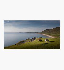 Sheep at Rhossili bay Photographic Print
