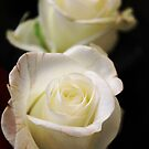 White Roses #1 by J J  Everson