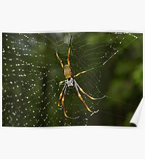 Golden Orb Poster