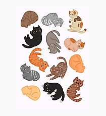 Cats and Cats and Cats Photographic Print