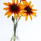 three rudbeckias in glas vase by OldaSimek