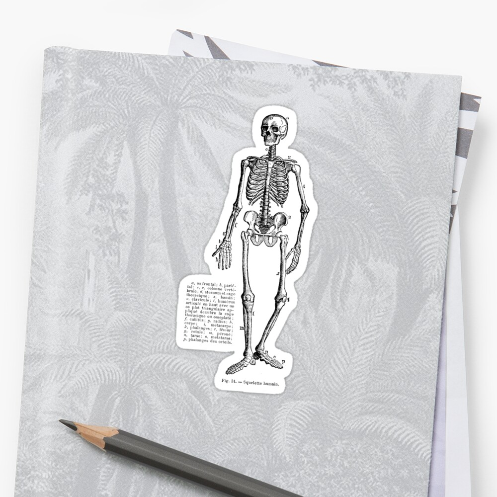 Renaissance Human Anatomy Skeleton Stickers By Pixelchicken Redbubble