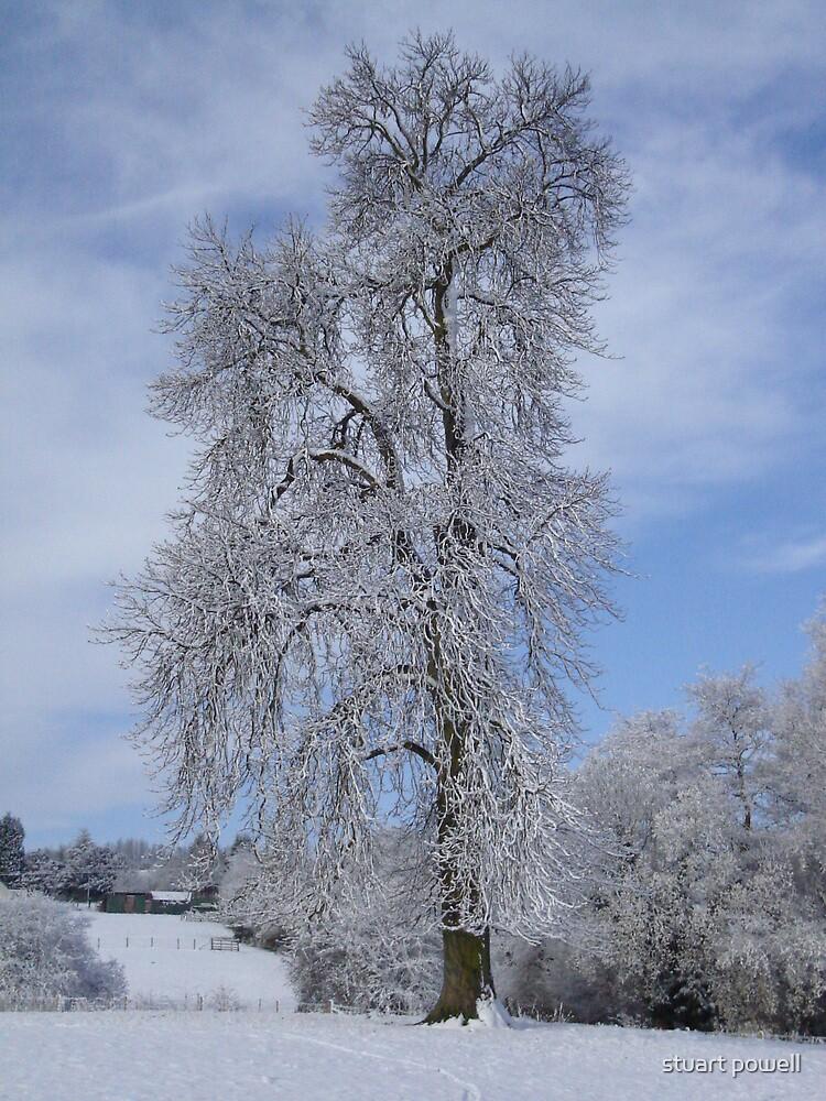 Winter Tree by stuart powell