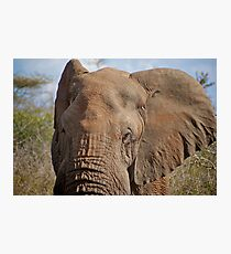 Big Ears — Kruger National Park, South Africa Photographic Print
