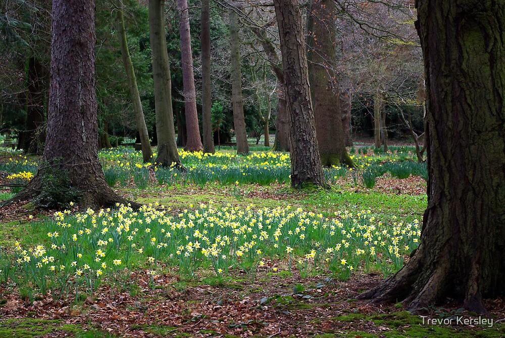 Daffodill Wood by Trevor Kersley