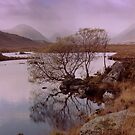 Rannoch Moor with tree by Kevin Allan