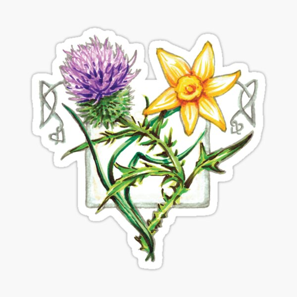 Thistle and Daffodil. Sticker