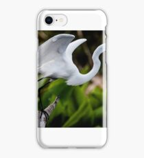 Great Egret In Everglades iPhone Case/Skin