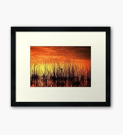 His Last Song of the Day Framed Print