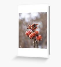 Pretty Rose Hips Greeting Card