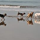 Dogs romping on a Bali beach by Michael Brewer