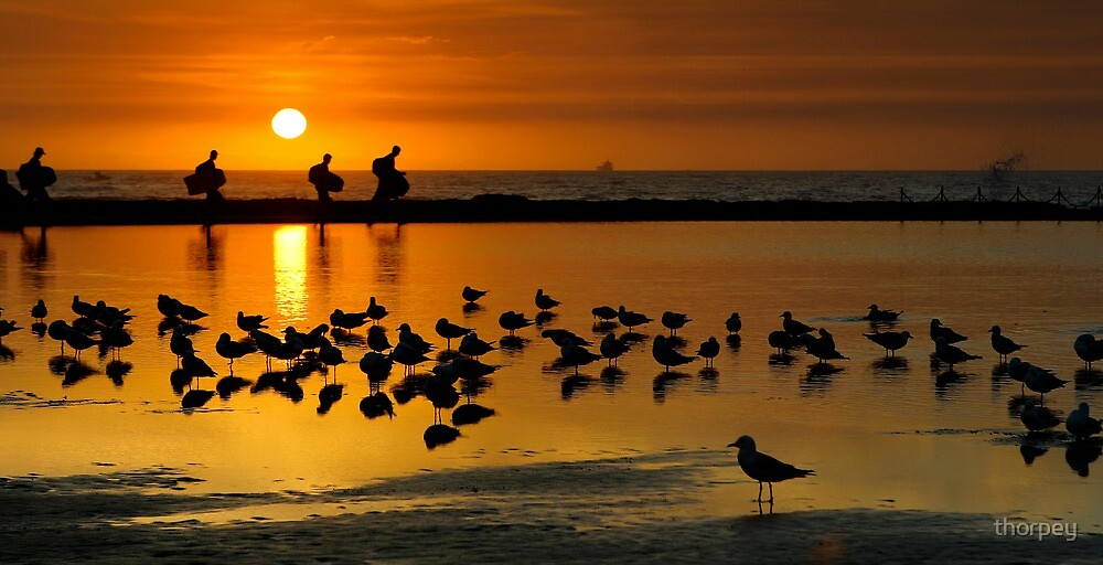 Seagulls 'n Surfers by thorpey
