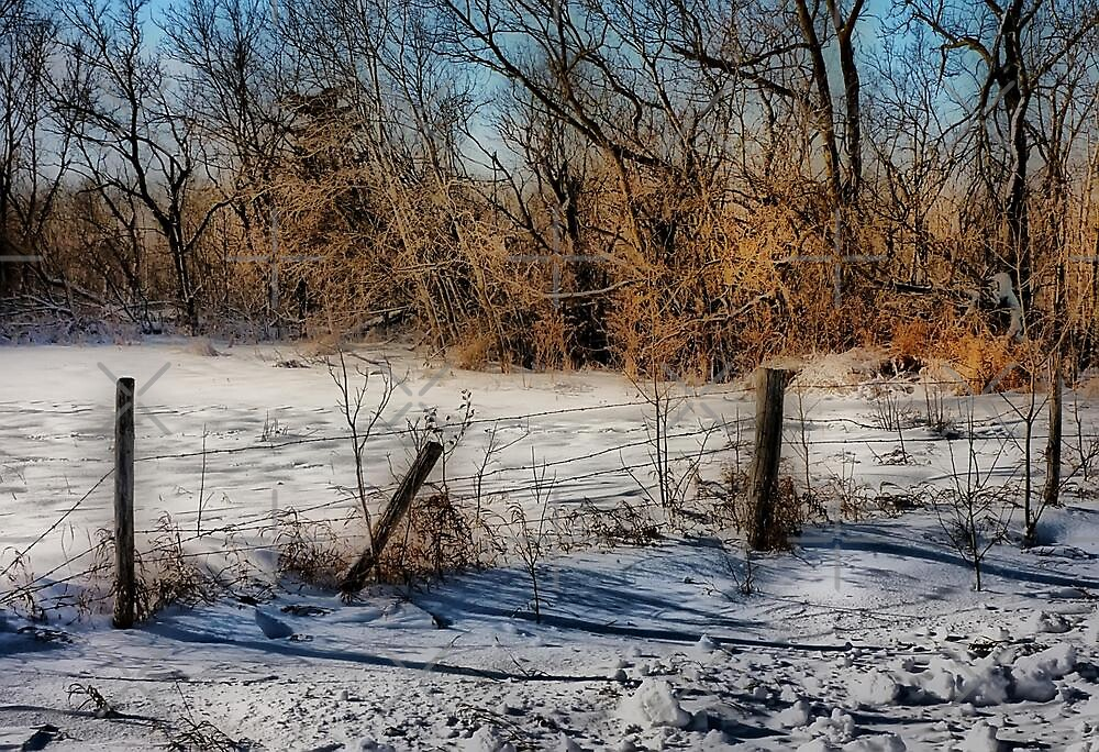Fenced Out by Vickie Emms