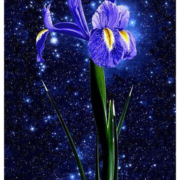 Starlight Iris, Purple, Digital Manipulation of an Iris Photo. by worn