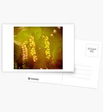 STRANGE FRUIT Postcards
