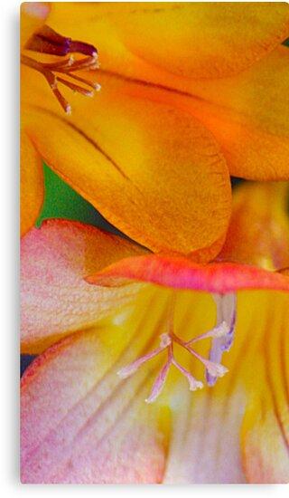 Tropical Flowers by Stephanie Jensen