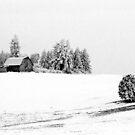 FARM IN HOAR FROST by Rodney55