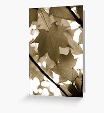 Skylit leaves Greeting Card