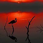 Magical Florida Sunrise! by Anthony Goldman