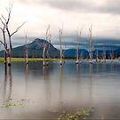 Lake Moogerah by Kym Howard
