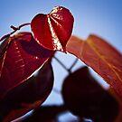 National Arboretum in Canberra/ACT/Australia (6) by Wolf Sverak